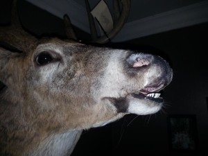 open mouth deer mount