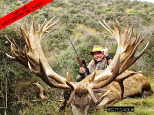 record stag