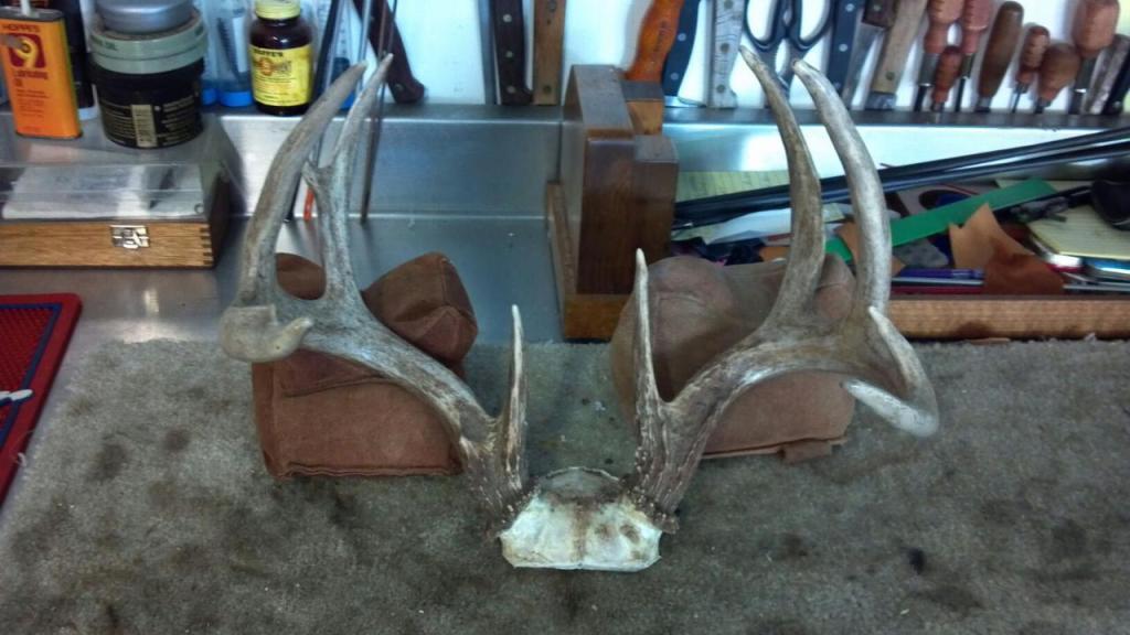 DIY Antler Mount for under 15 bucks