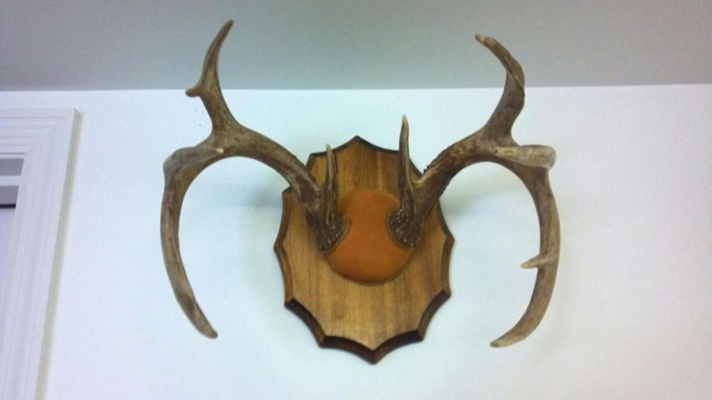 finished antler mount