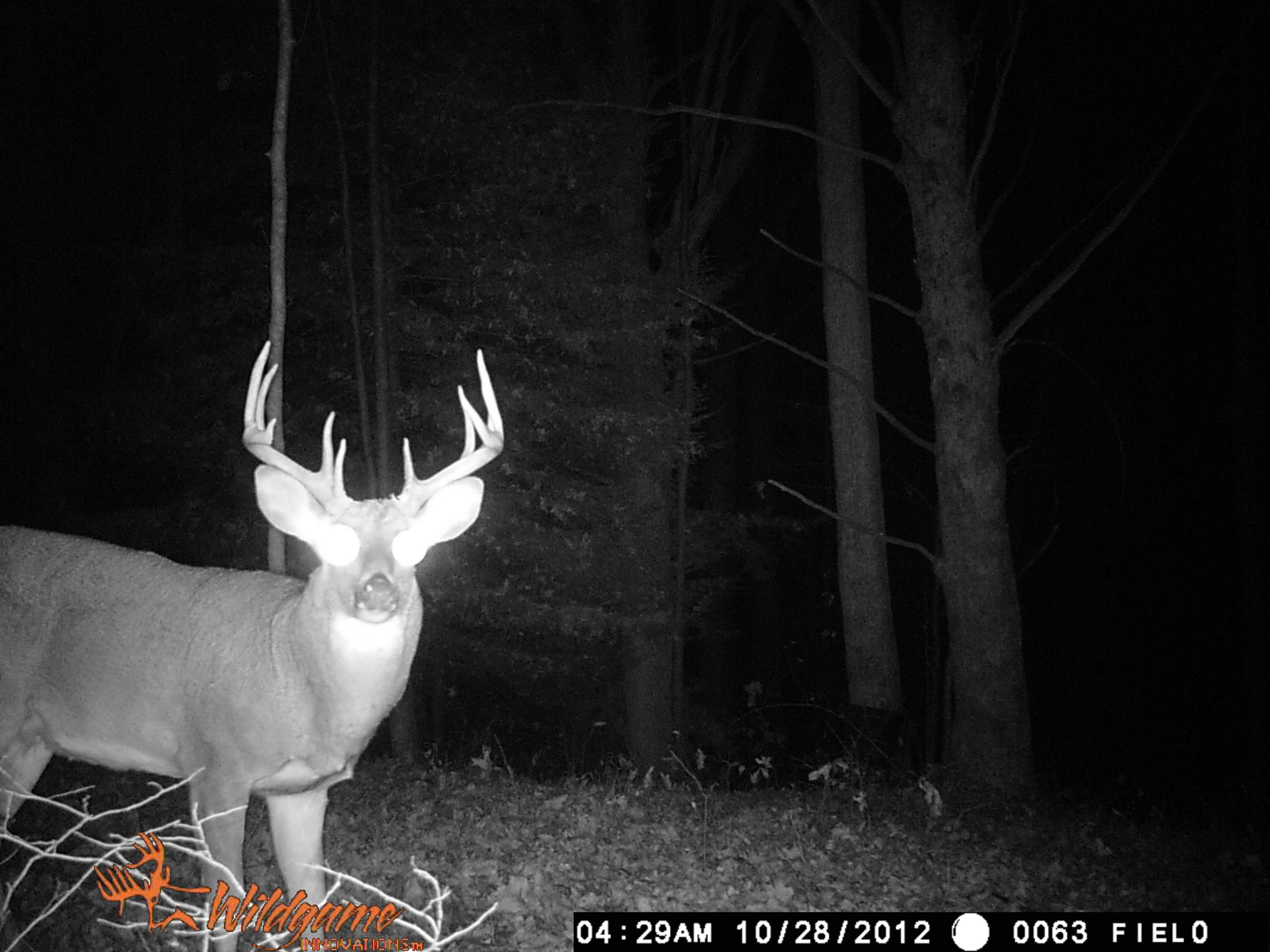 West Virginia Buck