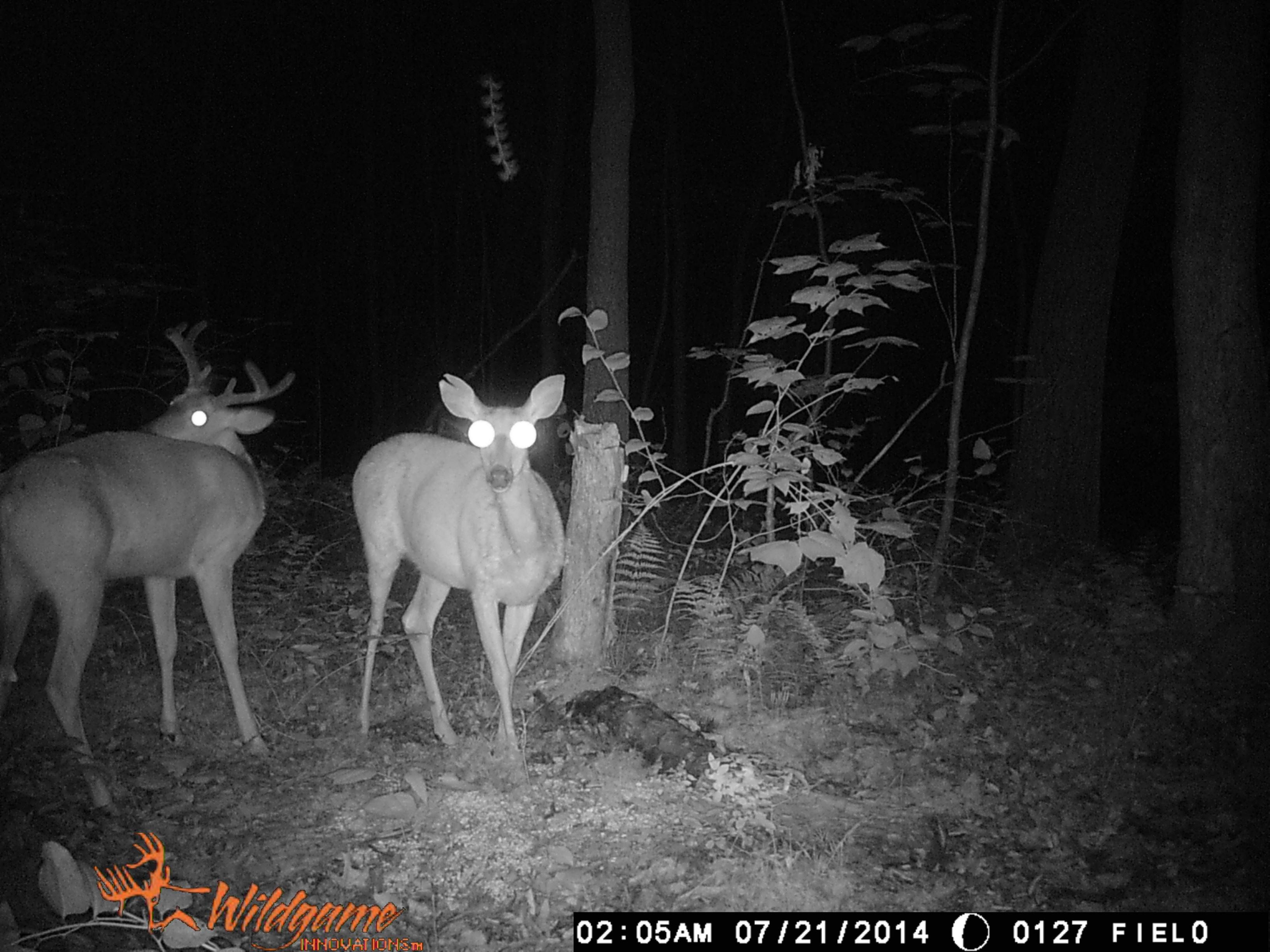 Pennsylvania Trail Cam