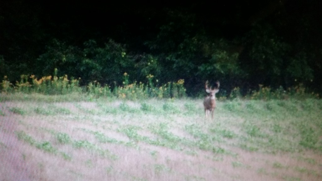 kansas deer video