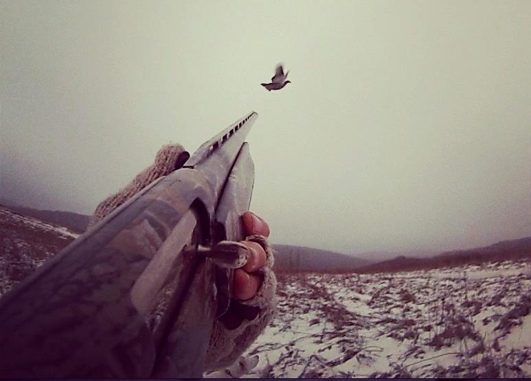 shotgun gopro
