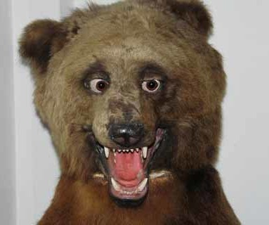 bad taxidermy