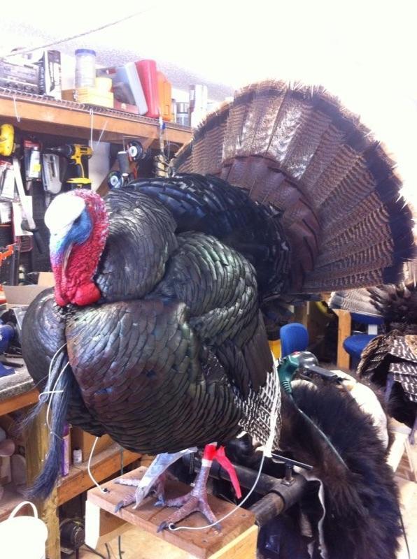 turkeymount2